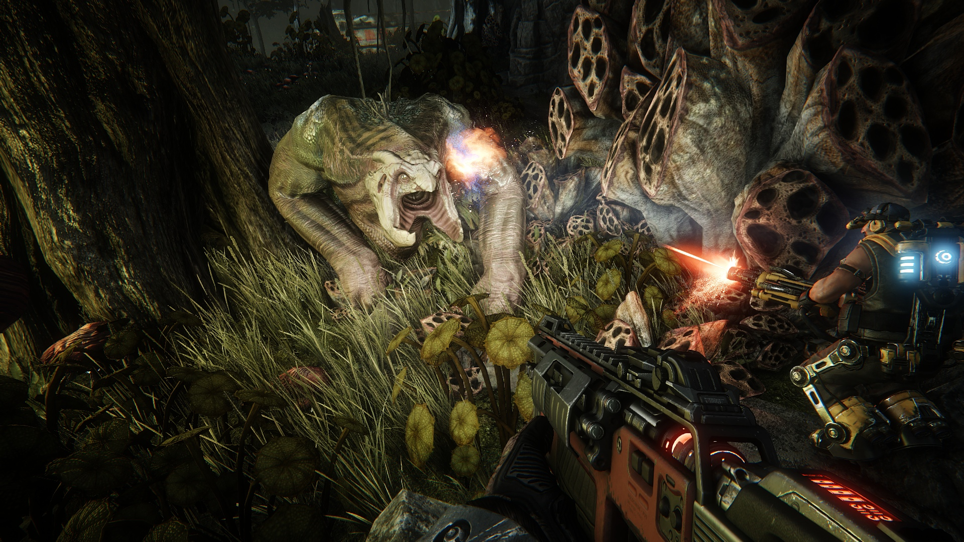 Evolve Review 4
