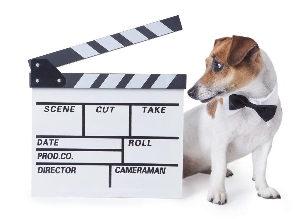 animal movies