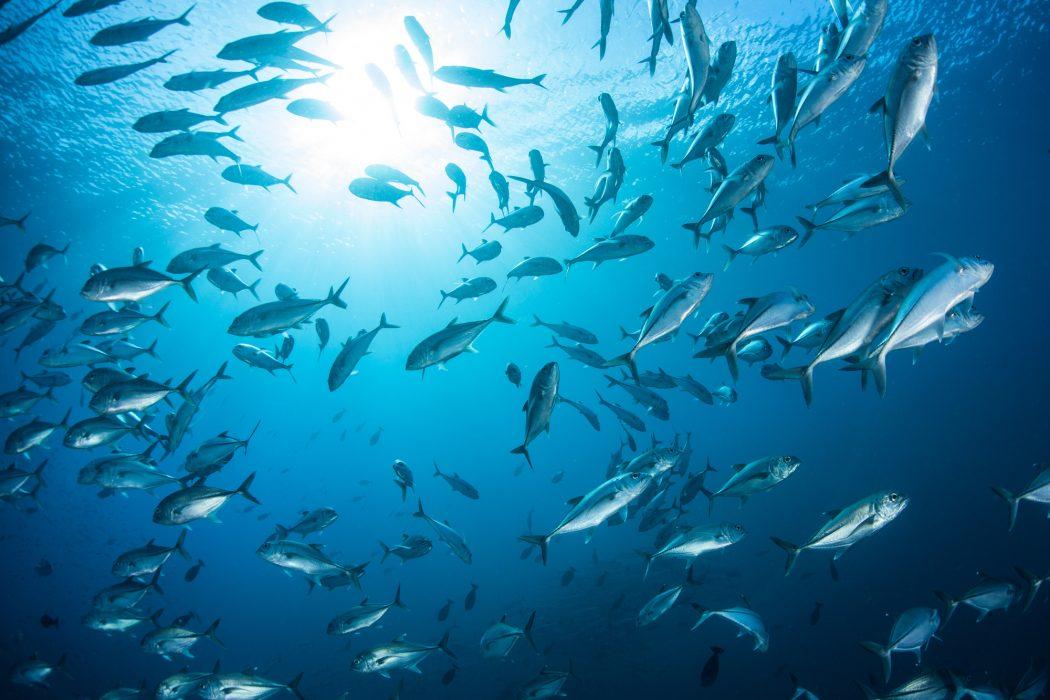 best ocean documentaries